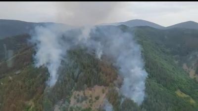 Incendiu uriaș pe Clisura Dunării, unde cinci hectare de răşinoase au luat foc. A fost solicitată intervenţia unui elicopter al MAI