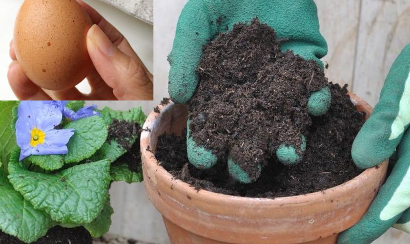 A îngropat un ou întreg în ghivecul florilor și a așteptat 2 săptămâni. Ce a descoperit apoi e uluitor