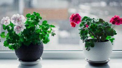 Ingredientele care îți învie plantele uscate. Trucul acesta secret e genial și ieftin