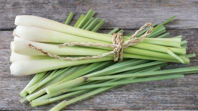 La ce se folosește, de fapt, lemongrass. TOP 8 rețete cu această plantă