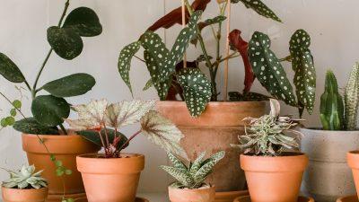"""Plantele """"vampiri energetici"""" pe care nu trebuie să le ții în casă. Cât rău îți fac"""