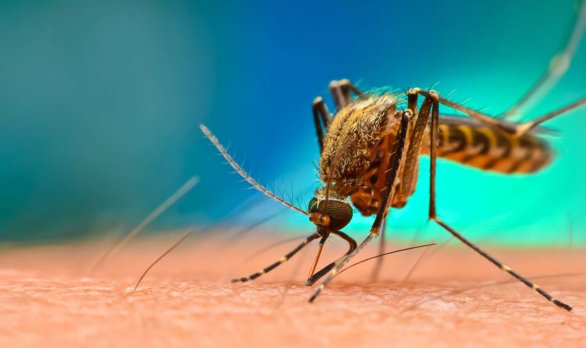 Cea mai simplă metodă de a scăpa de ţânţari. Ce lucru banal trebuie să faci, de fapt