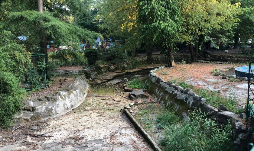 Imagini dezolante cu Parcul Cișmigiu, considerat unul dintre cele mai frumoase din București. În lac pot fi văzute sticle, pet-uri, piese de mobilier și chiar păsări moarte