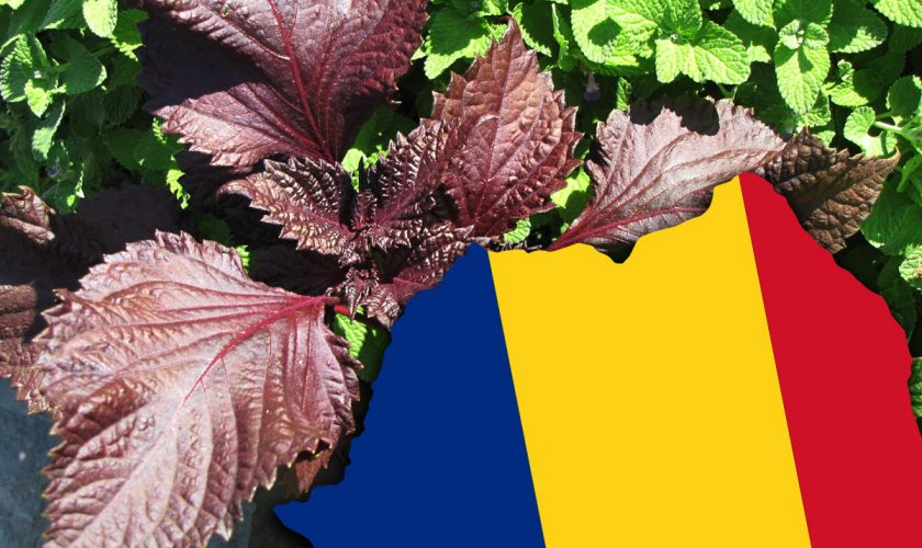 Planta minune din România care va fi omologată în curând: 'Este total diferită față de orice există'