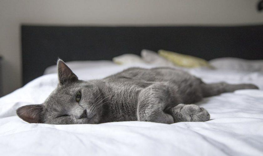 Vești proaste pentru stăpânii de pisici. Ce se întâmplă cu animalele lor când ei lucrează de acasă