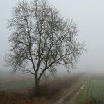 Alertă meteo ANM. Județele din România unde este pericol evident: vizibilitatea este sub 50 de metri