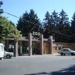 Cele mai frumoase grădini zoologice din România. Unde poți vedea animale deosebite