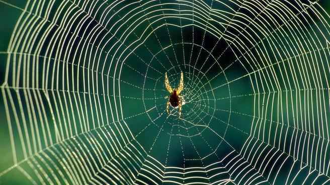 Spider web motor de recunoastere software