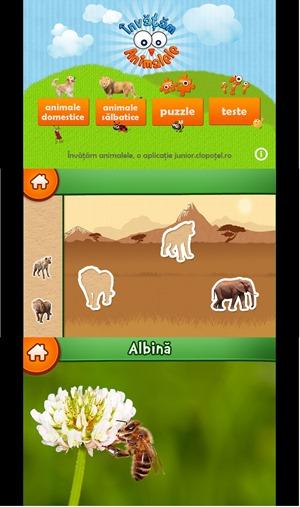 Invatam Animalele by Active Soft SRL