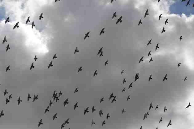 Warblr –  o nouă aplicaţie recunoaşte păsările din jur după cântat