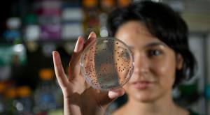 Bacteriile care ne-au influențat genele pe parcursul timpului