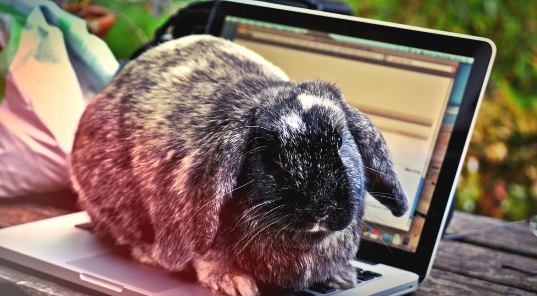 Reduceri de Paște. Promoții la televizoare, laptopuri și telefoane
