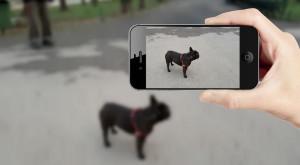 Wolfram Alpha știe ce este în fiecare poză pe care i-o arăți, folosind inteligența artificială