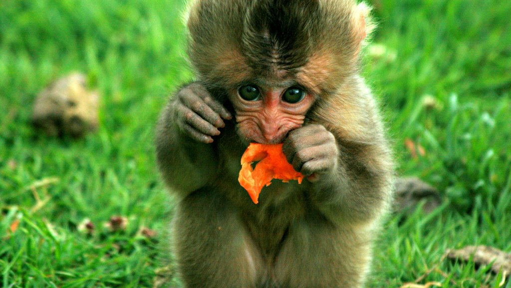 Alcoolismul, o boală preluată de la maimuțe [VIDEO]