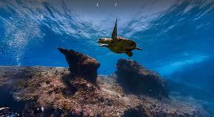Înoată cu delfinii fără să te uzi: Google Street View te duce sub apele lumii