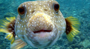 Cum arată peștii filmați la peste