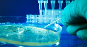 Cercetătorii au printat 3D celule stem embrionare