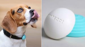 """Primul """"fitness tracker"""" pentru animale, Canhe-Fit, va fi dezvăluit la CES 2016"""