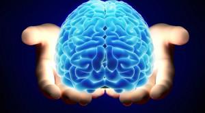 A fost găsită pentru prima oară dovada că inteligența e în celulele din creier