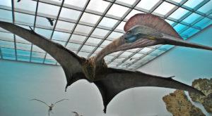 Cel mai mare dinozaur zburător din lume, expus la Antipa