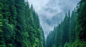 Sistemul care ar putea salva pădurile României