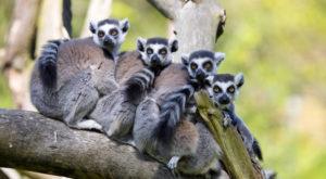 Recunoașterea facială ar putea ajuta la salvarea speciilor pe cale de dispariție