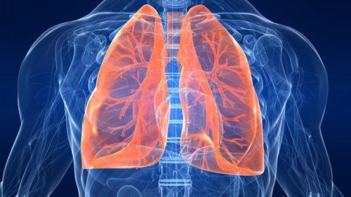 Plămânii au o funcție ascunsă și joacă un rol important în producția sângelui