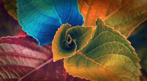 De ce frunzele au culori diferite și ce face ca nuanța lor să se modifice toamna