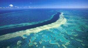 Marea Barieră de Corali se află în suferință și ar putea dispărea curând