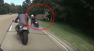 Un cerb realizează un salt spectaculos pentru a evita coliziunea cu un motociclist