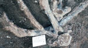 Noile fosile descoperite pun sub semnul întrebării întreaga istorie a umanității