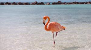 De ce păsările flamingo stau într-un picior