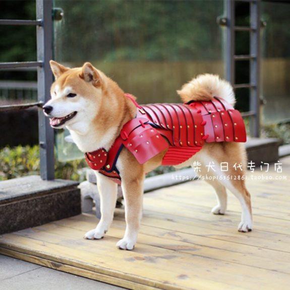 costume samurai pisici câini