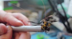 Libelula-robot își ia zborul și poate fi controlată de la distanță [VIDEO]
