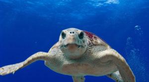 O treime din viața marină a fost distrusă în urma unei extincții de care nu aveam habar