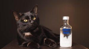 O pisică a fost salvată cu votcă după ce a băut antigel