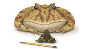 Această broască preistorică era capabilă să vâneze dinozauri