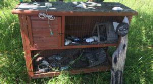 """CERN are """"adăpost de animale"""" pentru mouse-uri vechi"""