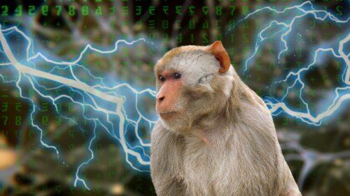 Ce se întâmplă când pui gene de om într-o maimuță