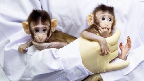 Experimentul care îl supără pe Dumnezeu: maimuțe încrucișate cu oameni și un rezultat surprinzător
