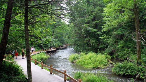 Studiul care te scoate din casă: ce câștigi din plimbările prin natură