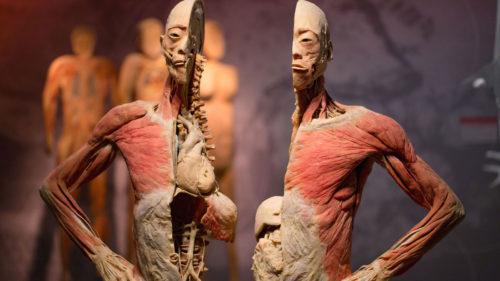 """Corpul uman mai are un """"organ"""" de care nu știai și e mai mare decât pielea"""
