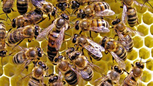 De când interzice UE folosirea pesticidelor care ucid albinele
