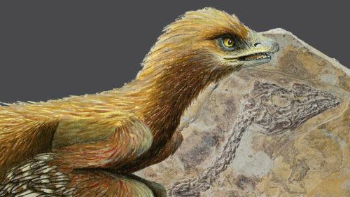 Cea mai mică fosilă de pui de pasăre te va surprinde