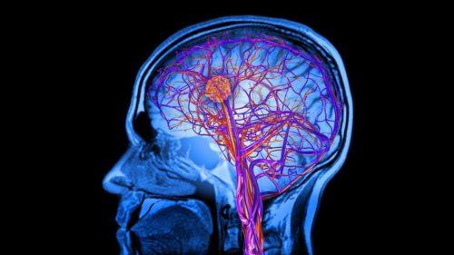 Diferența crucială dintre creierul tinerilor și al adulților
