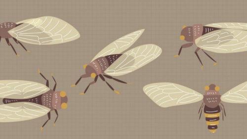 Studiul care demonstrează cum și de ce au apărut aripile insectelor