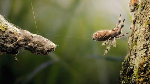 Studiul pe păianjeni care te-ar putea face să renunți definitiv la cafea