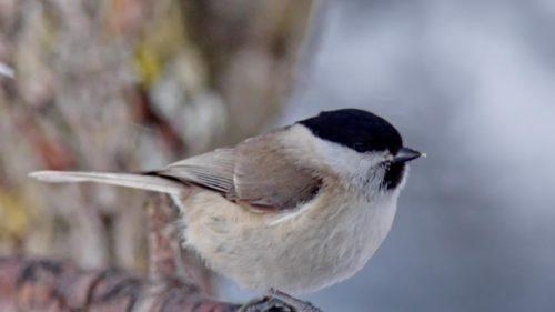 Consecințele iremediabile ale încălzirii globale: cât de repede dispar speciile de păsări de pe glob