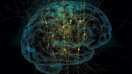 Inteligența artificială va identifica hemoragiile cerebrale mai bine decât medicii