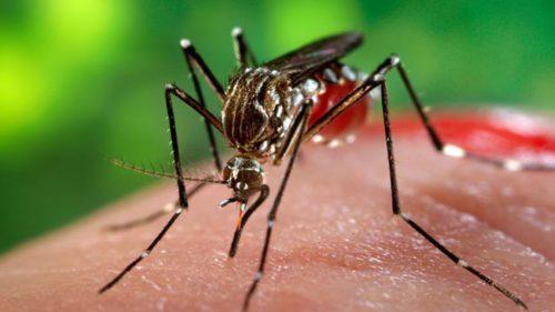 Românii care au descoperit un tratament mai bun pentru malarie